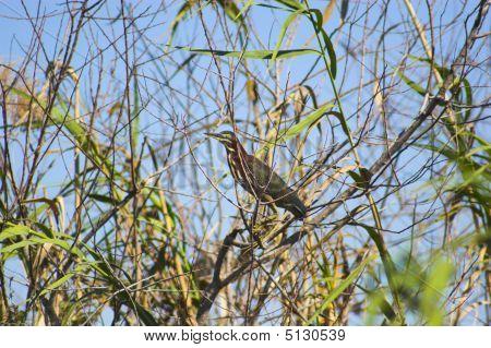 Everglades Bird