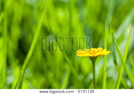 Yellow Daisy Side View
