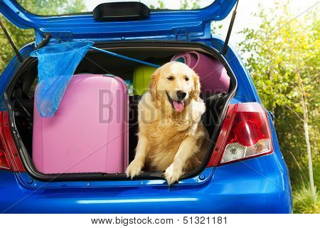 Dogs And Luggage To Go On Trip
