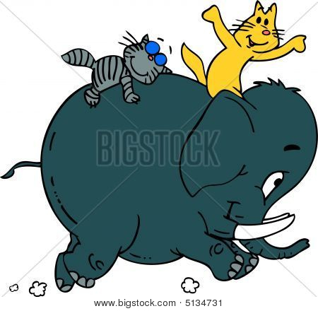 Cats And Elephant