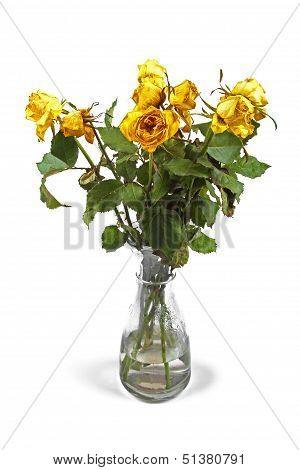 Wilted Roses In Vase Isolated On White