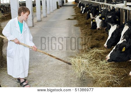 Smiling boy in white coat loads hay by big pitchfork for cows at large farm.