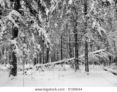 Kareliya: A Winter Wood
