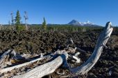 stock photo of mckenzie  - Lava flows near Mckenzie pass in central Oregon - JPG