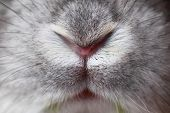 foto of tame  - Rabbit mouth and nose abstract  - JPG