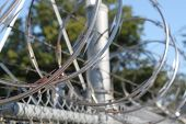 Barbwire and razor wire fence