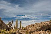 stock photo of peyote  - View of Incahuasi island Salar de Uyuni Bolivia