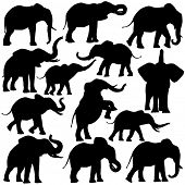 stock photo of tusks  - Set of editable vector silhouettes of African elephants in various poses - JPG