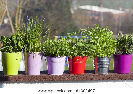 Fresh Herbs On The Balcony