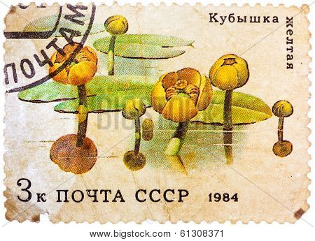 Post Stamp Printed In Ussr (cccp, Soviet Union) Shows Image Of Water Lilies