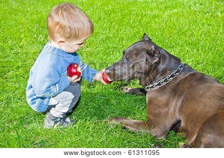 Cute boy regales to a dog apple