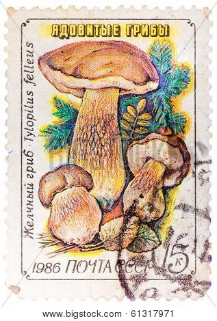Stamp Printed In Ussr, Tylopilus Felleus, Formerly Boletus Felleus Mushroom In Wild