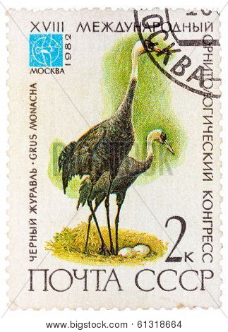 Stamp Printed In Ussr (russia) Shows A Bird Grus Monacha With The Inscription And Name Of Series