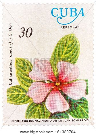 Stamp Shows Image Of A Vinca Rosea With The Inscription