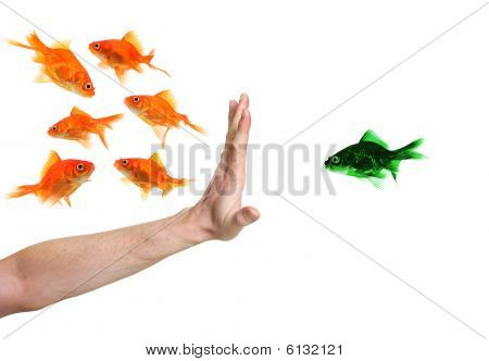 Hand Discriminating Green Goldfish