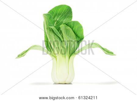 Chinese Cabbage Standing On White Background