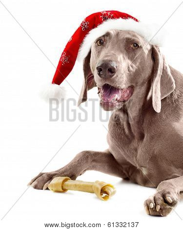 Santadog With Bone