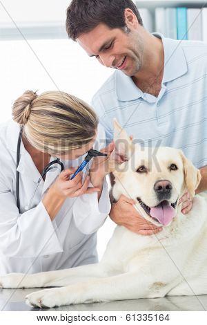 Female veterinarian examining ear of dog with man in medical office