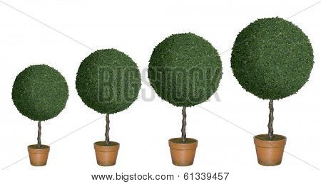 Row of topiary trees of various sizes