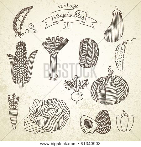 Tasty vegetables in vector set - green peas, eggplant, potato, carrot, pumpkin, avocado, leek, corn, cucumber, cabbage, radish, pepper. Vintage vegetarian concept collection