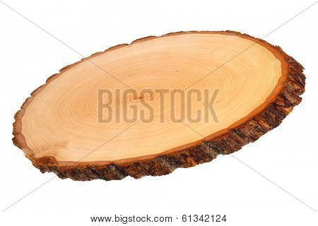 Slice of wood showing tree rings