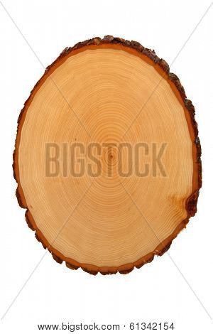Tree trunk cross section showing growth rings