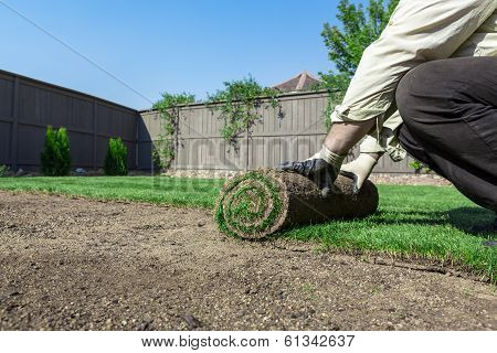 Installing new lawn