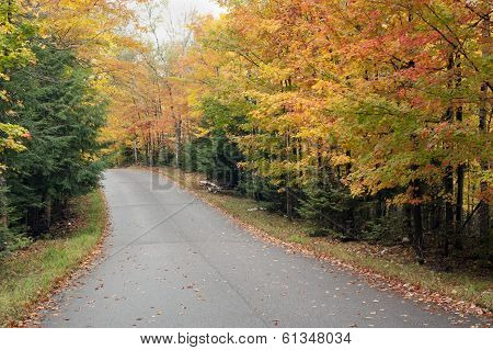 Road Through Autumn Forest.