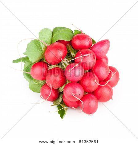 Bunch Of Garden Radish