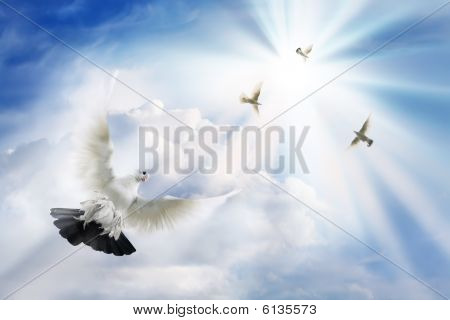 Doves Soaring In Solar Beams