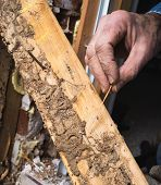 image of termite  - Closeup photo of man - JPG