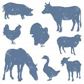 stock photo of turkey-hen  - Set of Farm Animals Silhouettes - JPG
