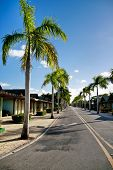 pic of tree lined street  - Yellow dividing lines on road on caribbean street - JPG