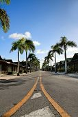 picture of tree lined street  - Yellow dividing lines on road on tropic street - JPG