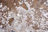 foto of crystal salt  - Close up of salt crystals in evaporation pond - JPG