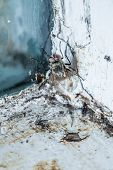 picture of nasty  - Nasty Housefly in a Dirty Window Frame Corner - JPG