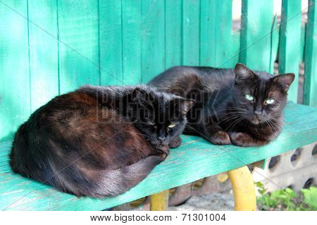 Two Black Cat Laying On The Bench