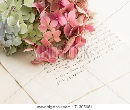 Old Love Letters And Flowers Of Garden Hortensia