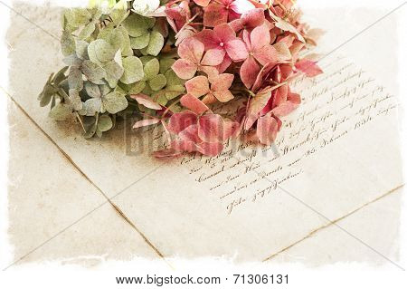 old manuscript and hortensia flowers