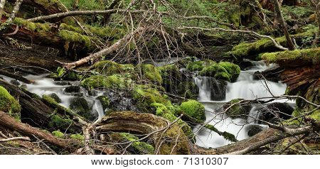 Small waterfall in forest, Tierra del Fuego, Argentina