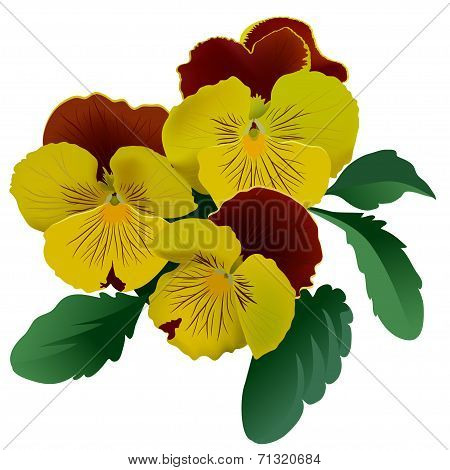 Three yellow pansy flowers