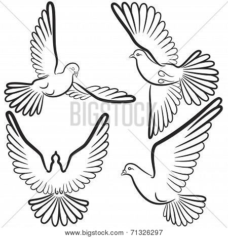 Black and white contours of four pigeons that fly