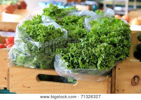 Bags filled with leafy lettuce at market