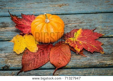 A small miniature pumpkin and fall leaves.