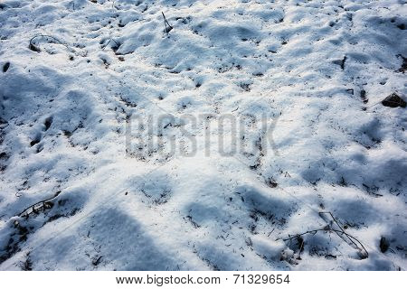 Snow Ground