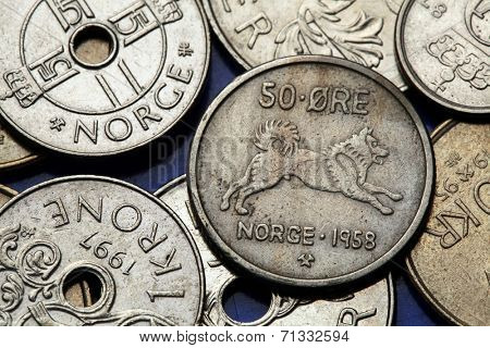 Coins of Norway. Norwegian Elkhound dog depicted in Norwegian fifty ore coin.