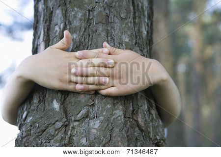 Closeup of hands embracing tree trunk