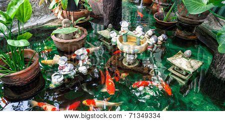 Koi Carps In A Pond