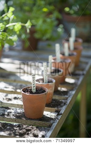 Row of terracotta flowerpots with labels of savings in greenhouse