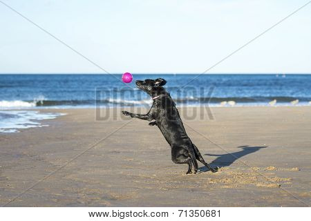 Dog Jumping In Mid Air To Catch A Ball